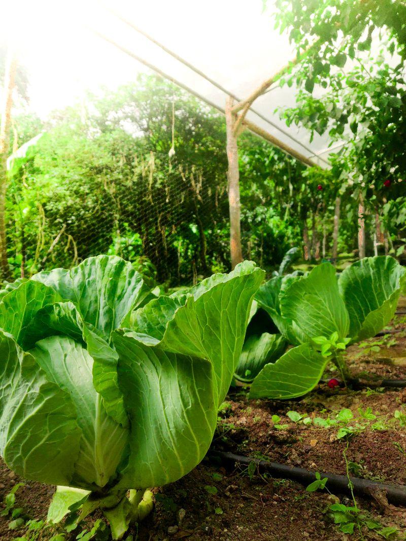 Farm Rama Organica